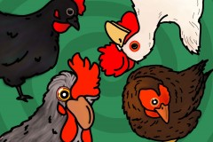 Copy-of-BadArt_Chickens