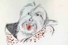 bkramer-pup-ecopy