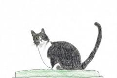 bw-cat_KV