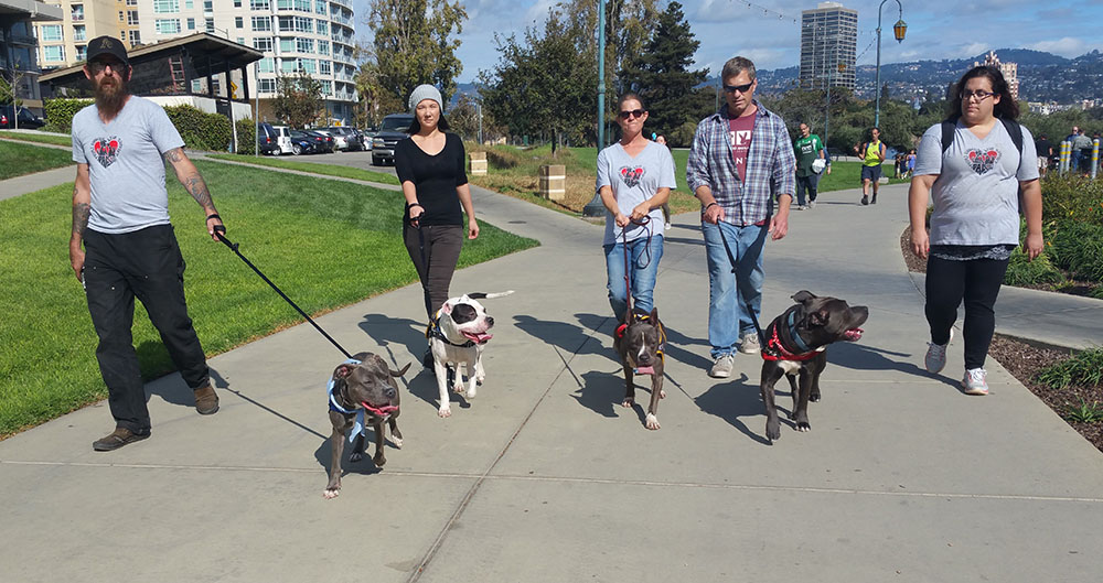 Volunteers taking OAS dogs for an outing to Lake Merritt.
