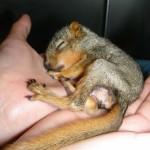 baby-squirrels-01