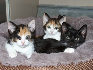 CA-kittens