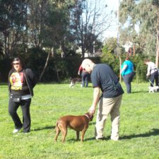 Dog training classes no longer offered at OAS