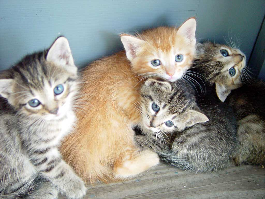 cute baby kitten photos