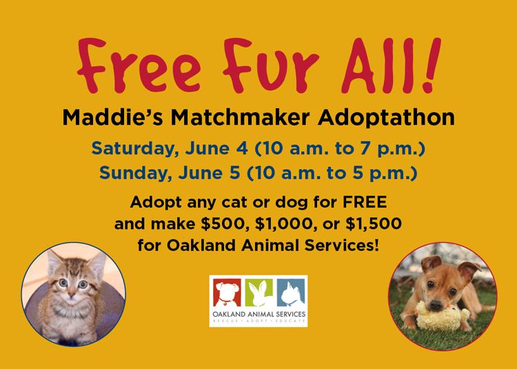 Dog Adoption Matchmaker