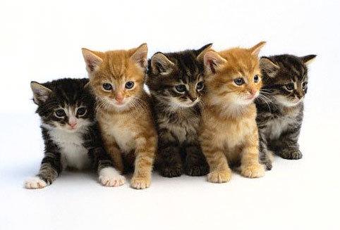 kittenbabies