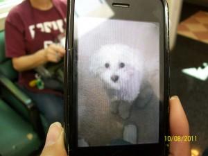 poodle phone