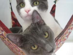 Cats in hammock