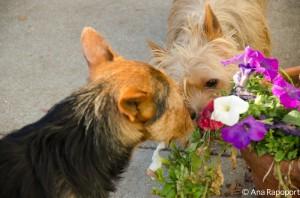 james oakley flowers