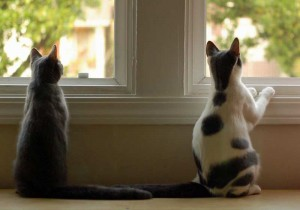 kitties out the window