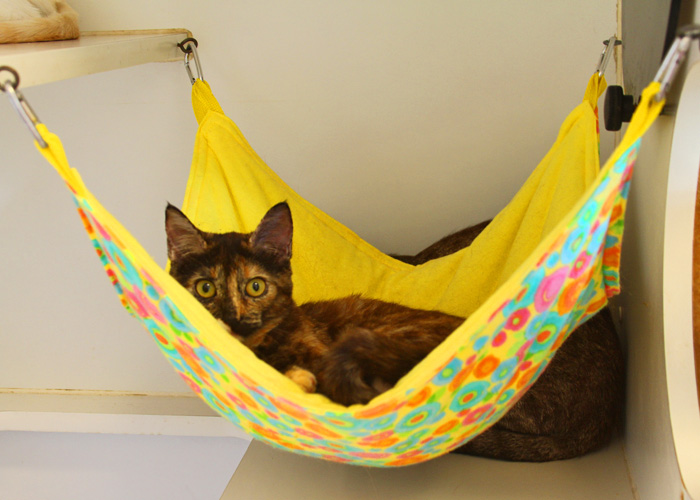 Cats on pinterest cat hammock outdoor cat enclosure and - How to make a pet hammock ...
