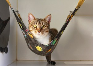 just     cat hammocks  the purr fect solution  rh   oaklandanimalservices org