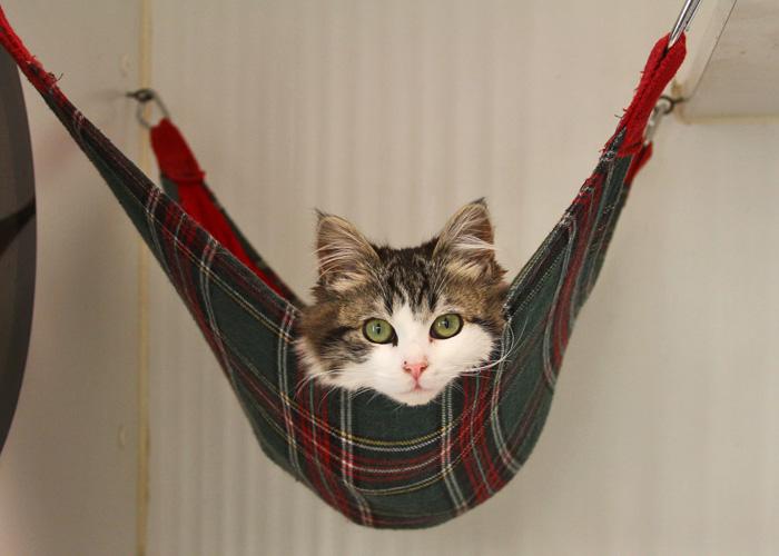 cat hammocks  the purr fect solution  rh   oaklandanimalservices org