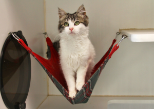this may seem like a small thing but it makes a big difference in the lives of shelter cats  cat hammocks  the purr fect solution  rh   oaklandanimalservices org