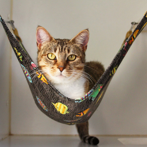 cat-hammock-wish