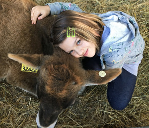 A volunteer's daughter saying hello to one of the goats found with a cow under a freeway overpass in Oakland.
