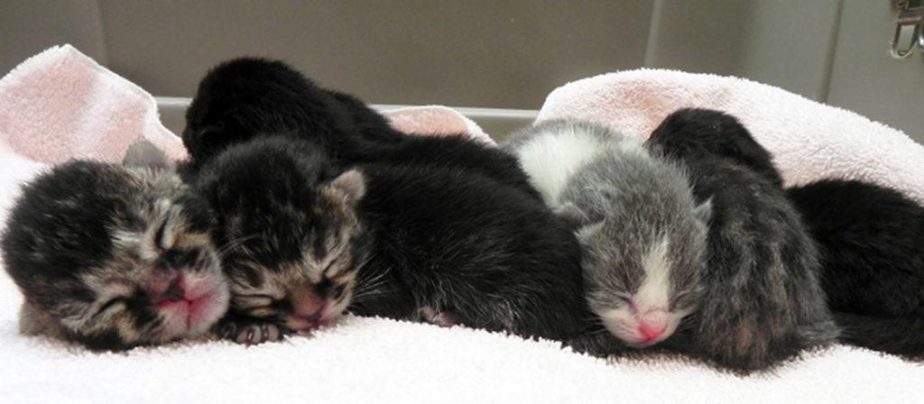 kittens-banner-pfe-homepage