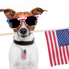 Pet Owner Tips for 4th of July