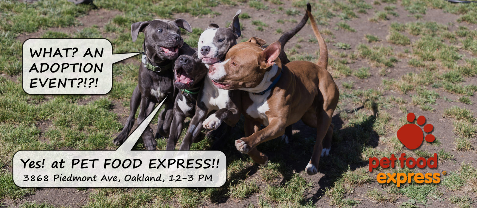 Pet Food Express Adoption Event