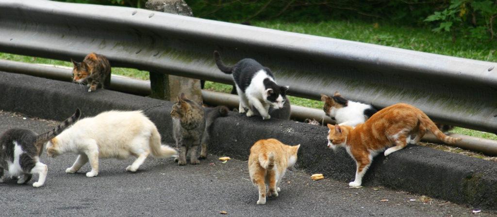 feral-cats-wikimedia