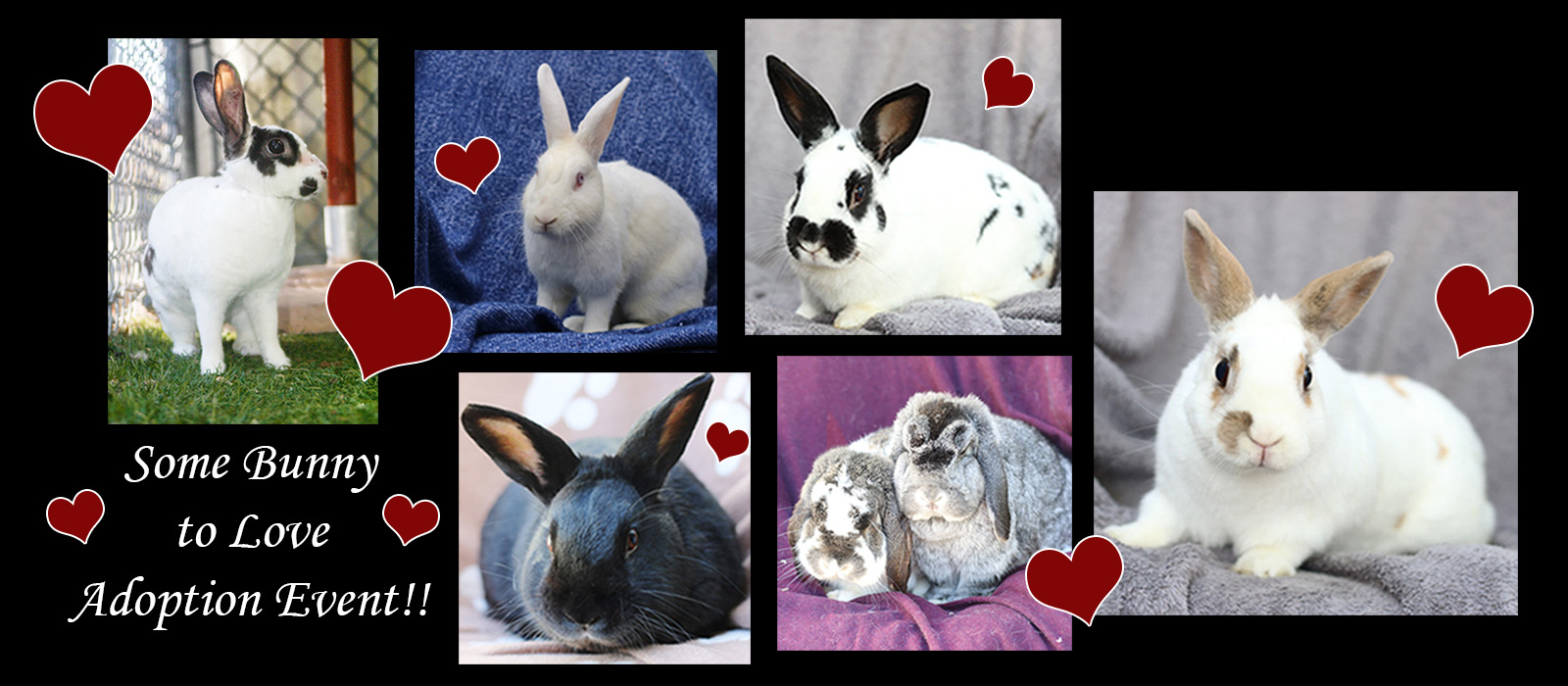 Some Bunny to Love Adoption Event