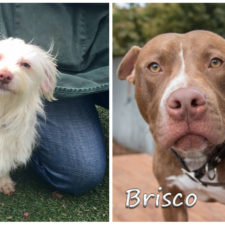 Wanted: two foster-heroes for Daisy and Brisco!