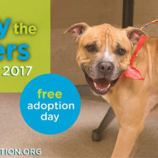 Empty the Shelters, Sponsored by Bissell Pet Foundation