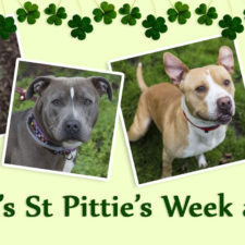 It's St Pittie's Week at OAS!