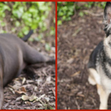 Seniors Remy and Ruby seek their forever families!