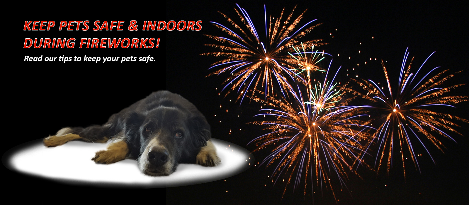 Pet owner tips for the Fourth of July Holiday