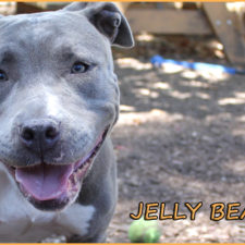Jelly Bean seeks a foster or forever home!!