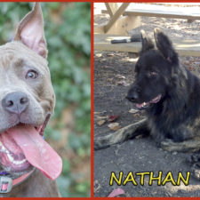 Cashmere and Nathan seek foster or forever families