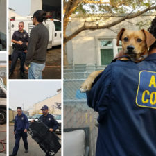 Oakland Animal Services Mobilizes to Provide Mutual Aid to Napa/Sonoma Animal Shelters