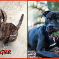 Butterfinger and Finn seek foster or forever families