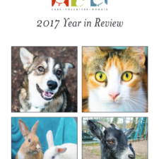 2017 FOAS Year in Review