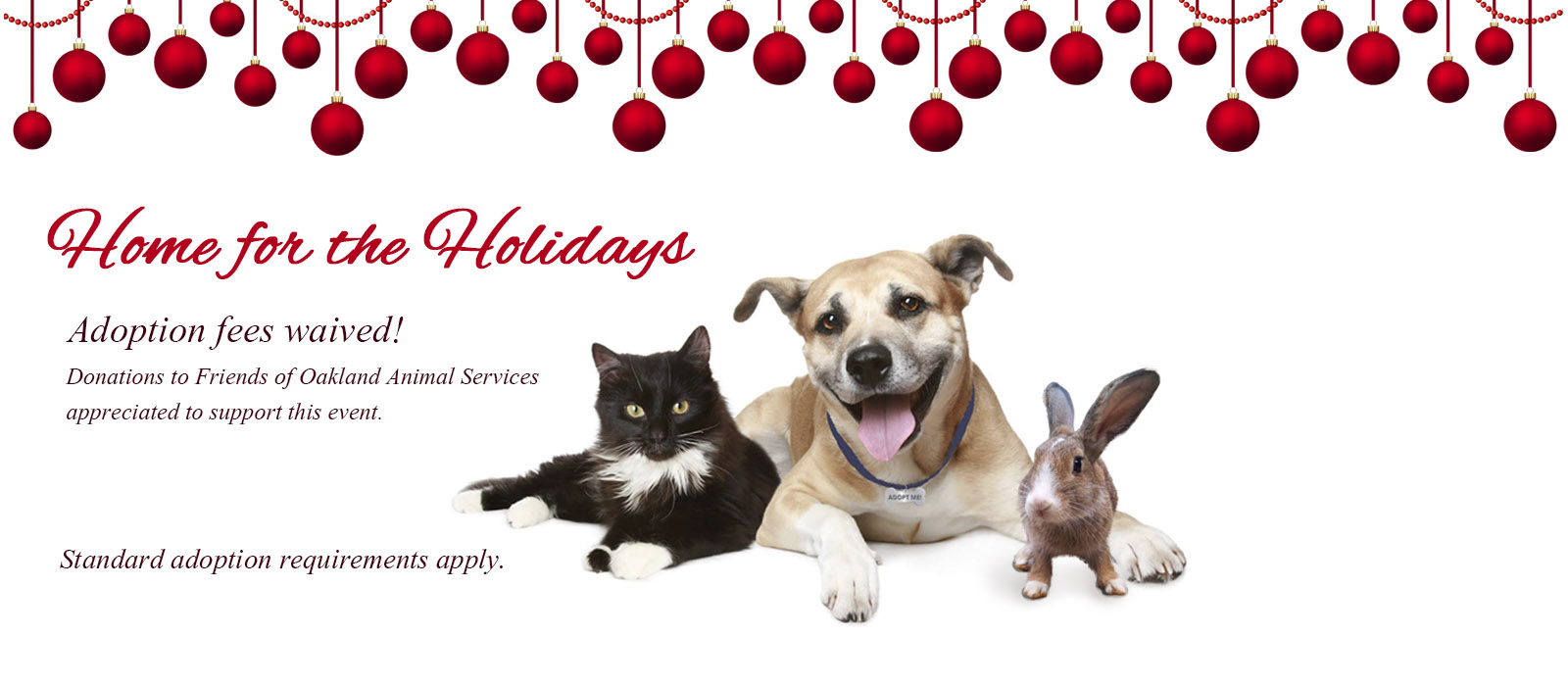 Home for the Holidays: Adoptions fees waived through January 7
