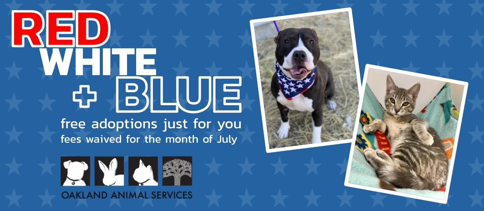 Red, White & Blue – Free Adoptions Just for You!