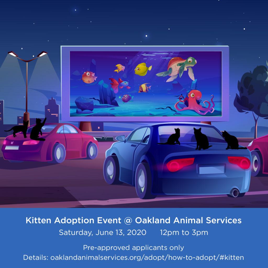 KittenAdoptionEvent