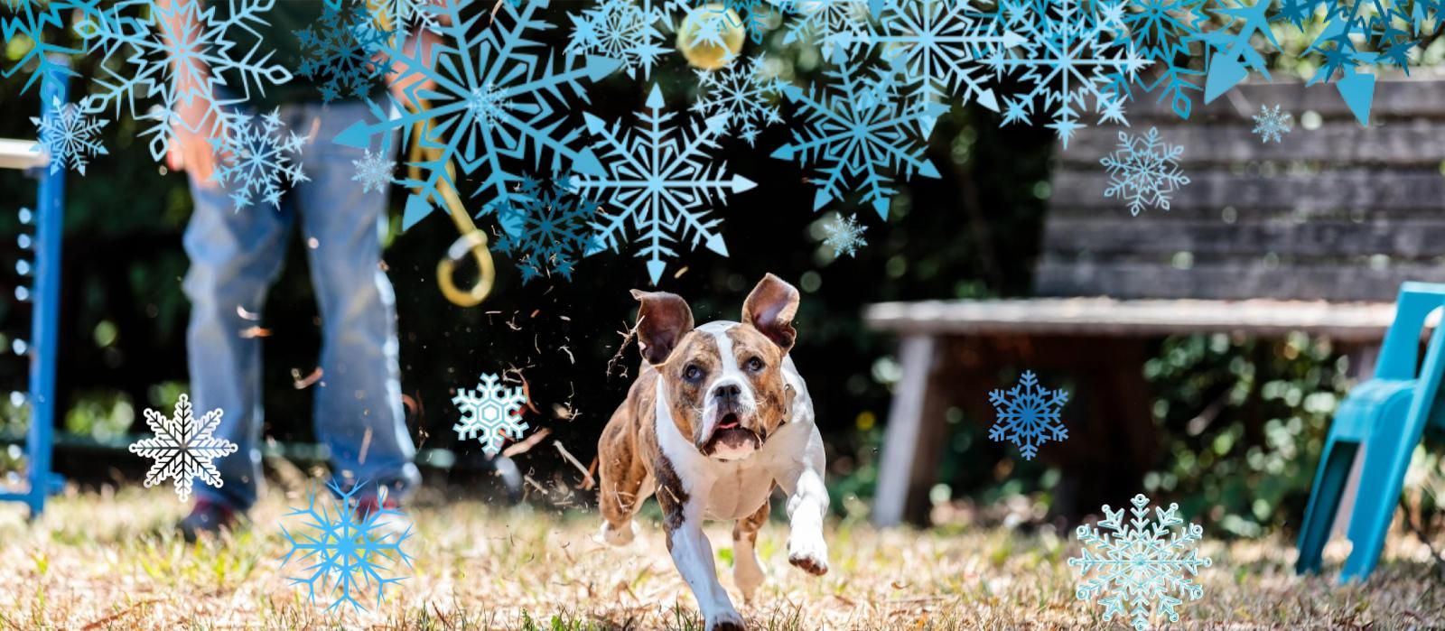 Help animals go home for the holidays with our biggest gift match ever