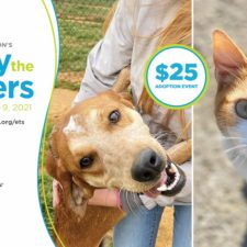Empty the Shelters banner