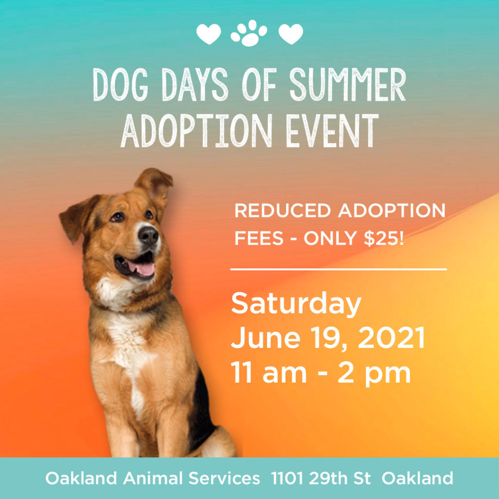 Dog Days of Summer Adoption Event