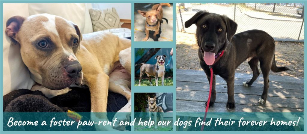 Become a foster paw-rent and help our dogs find their forever homes!