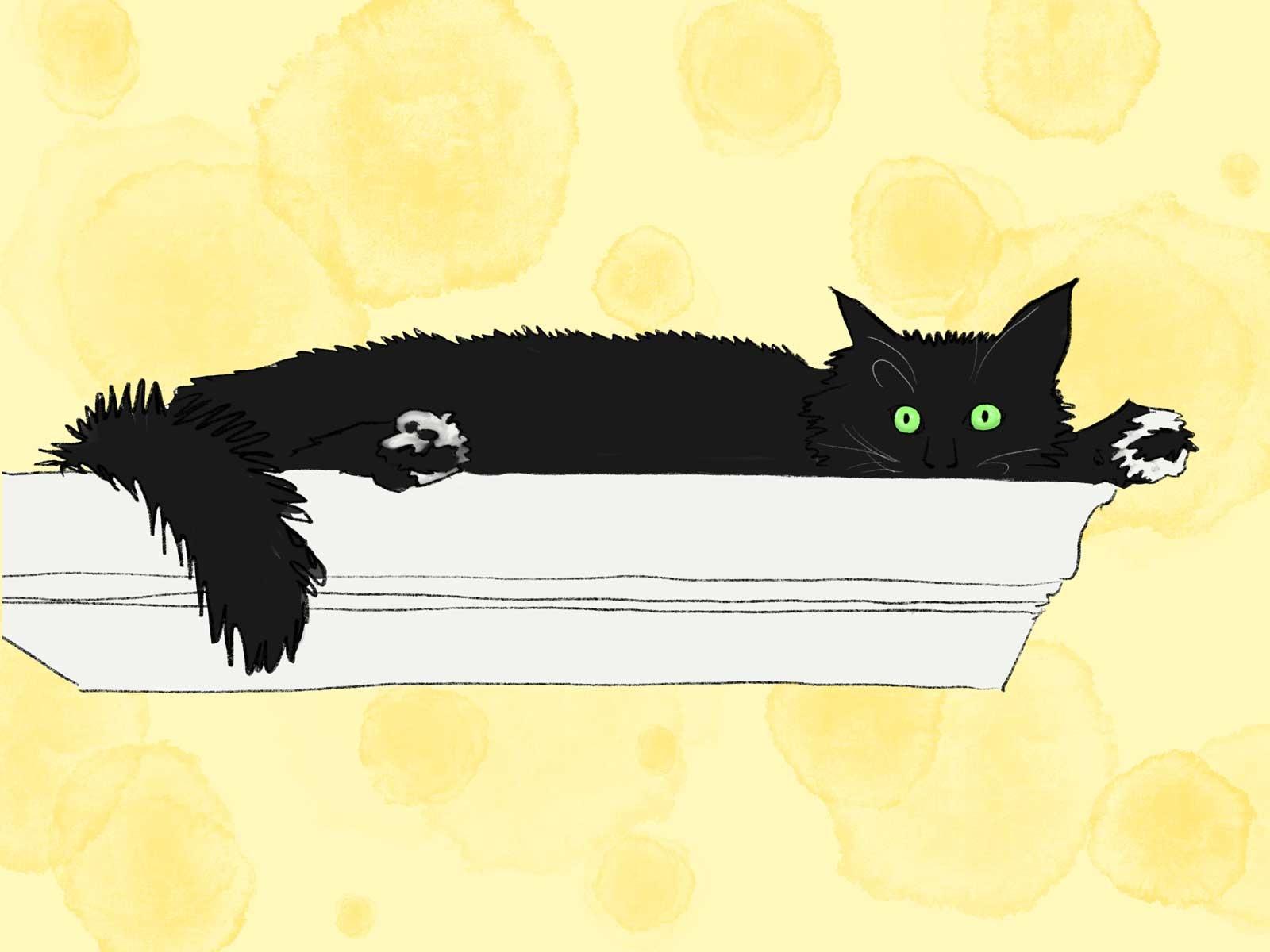 1_Cat-on-Shelf-Art