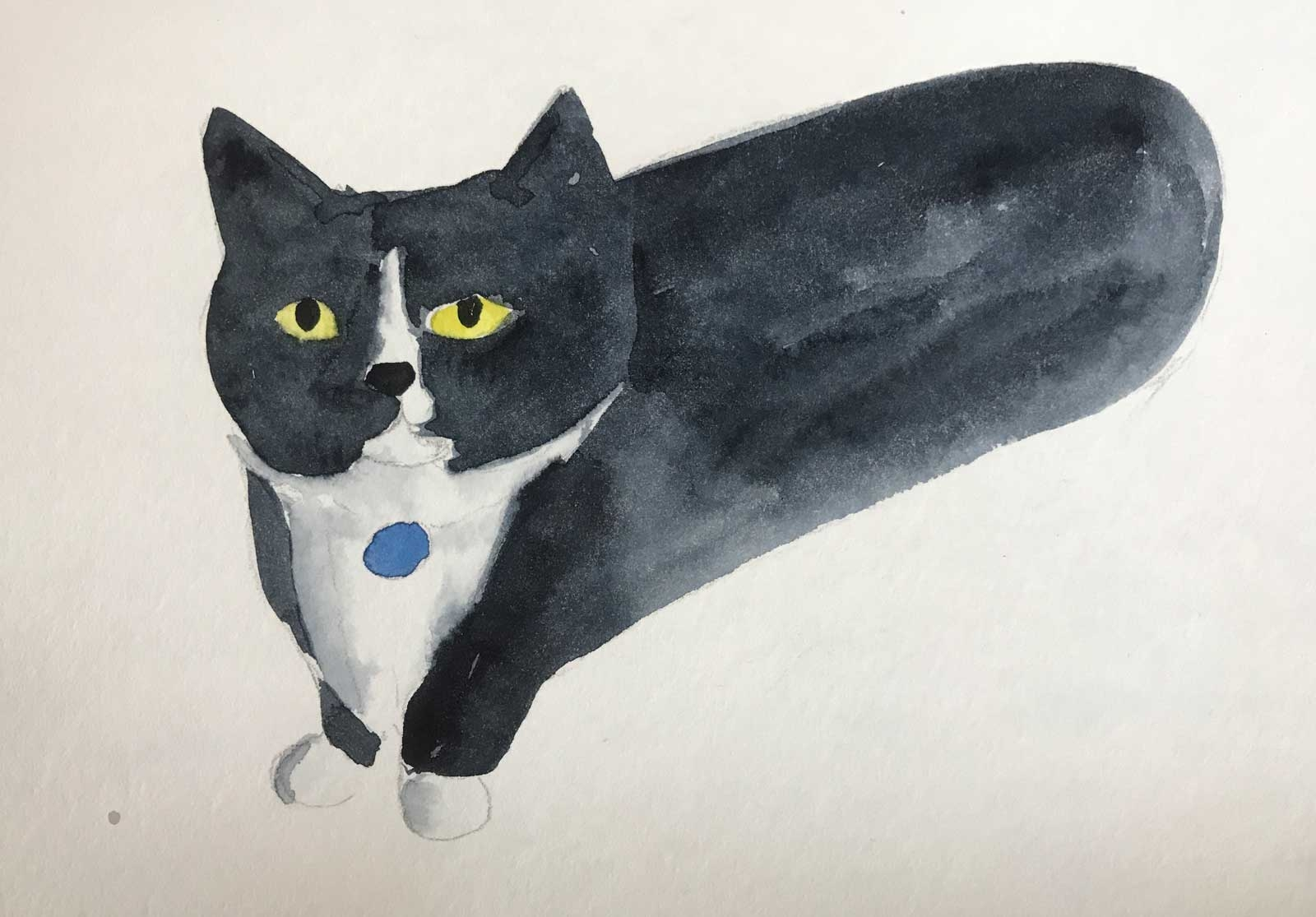 Black-_-White-Cat-with-Tag-Art