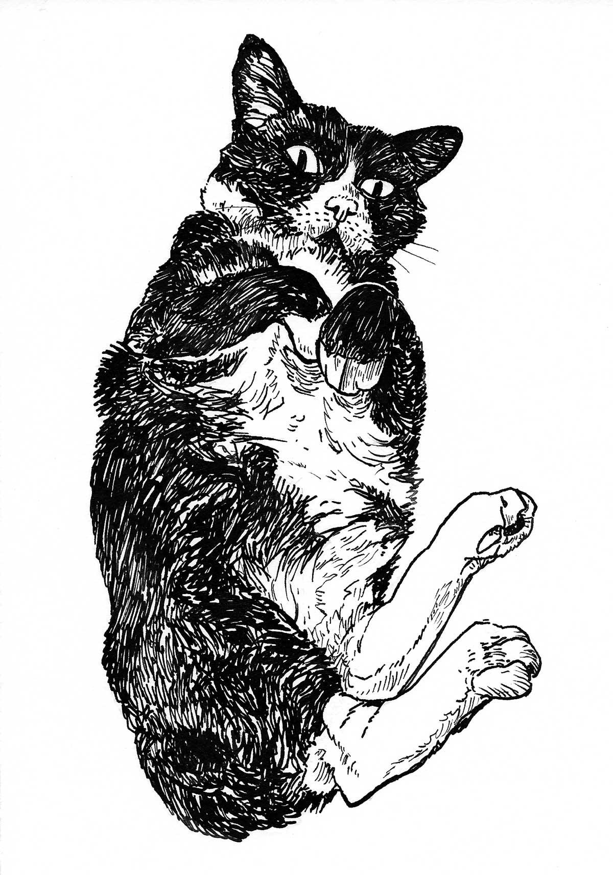 Black-_-White-Round-Cat-Art