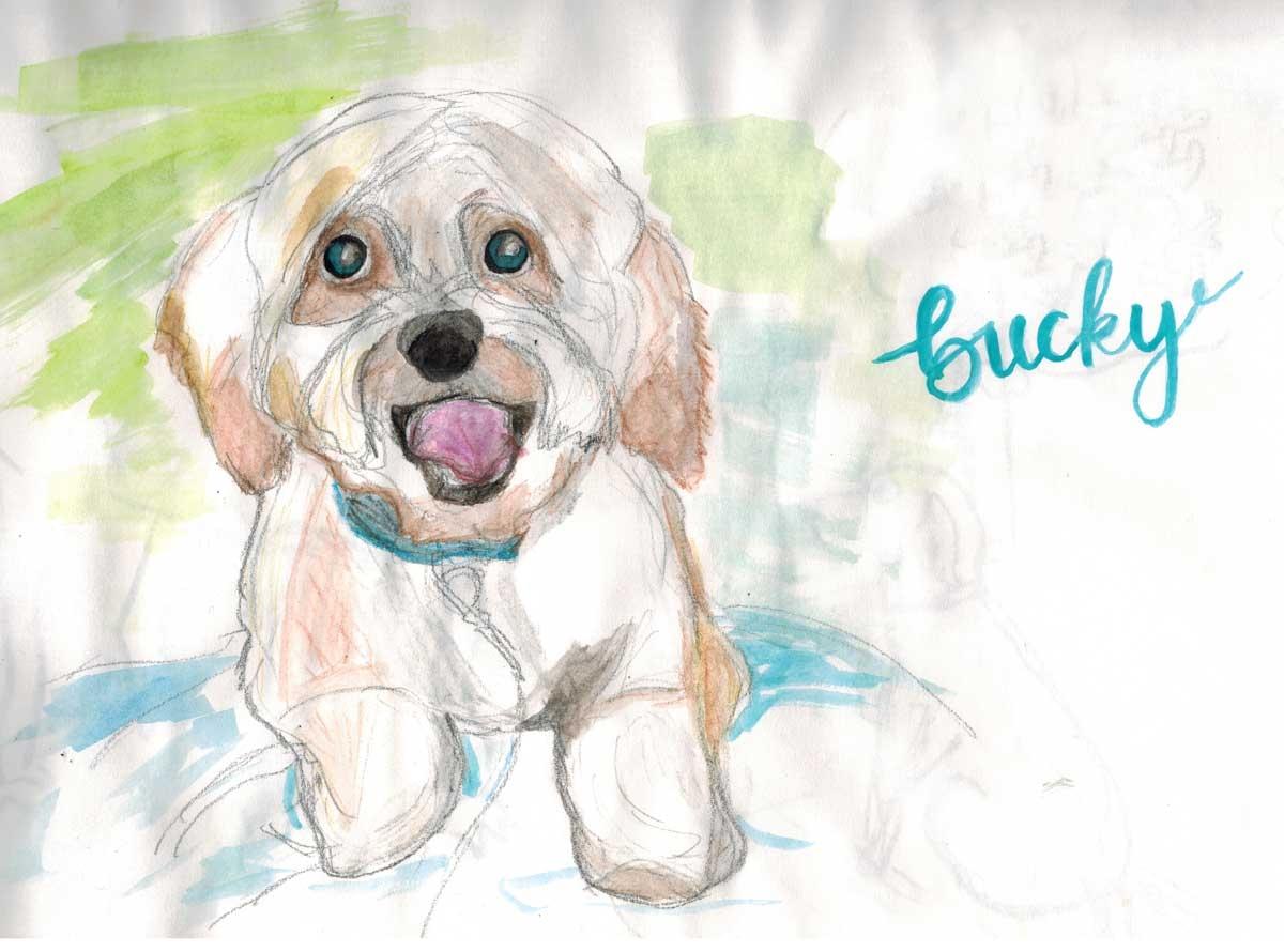 Bucky-Art