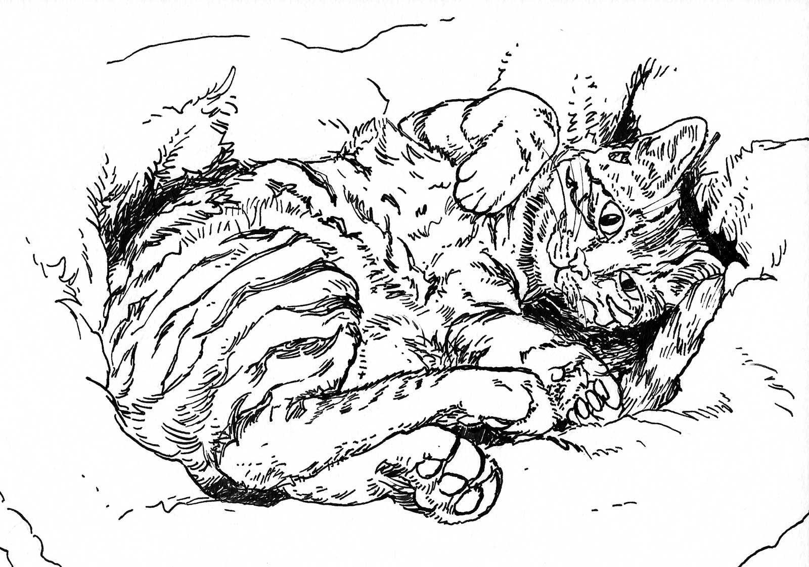 CW-Cat-Art