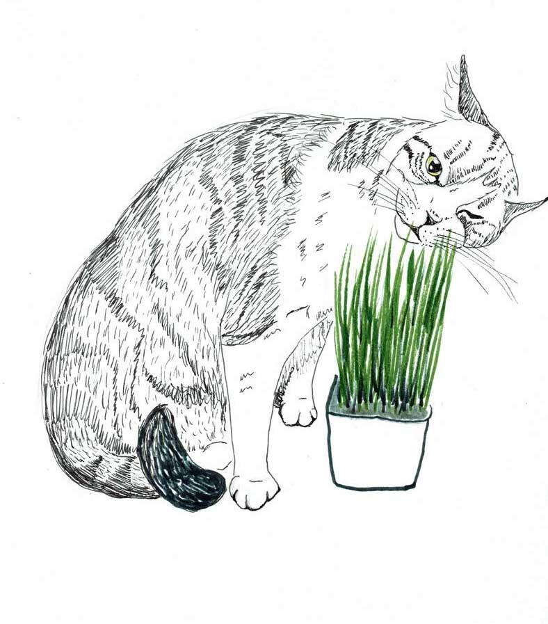 Cat2-Art