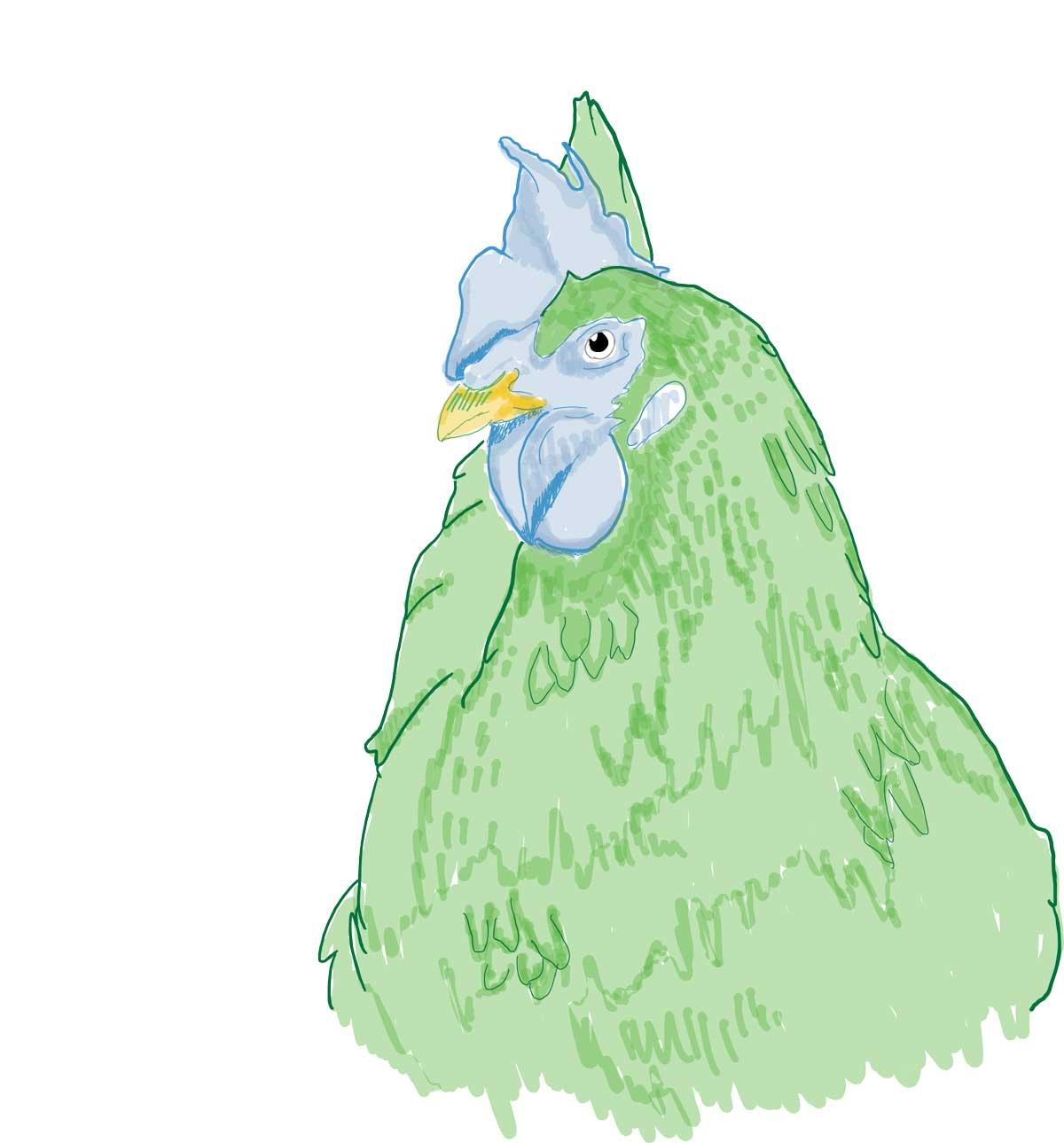 Chicken-Art