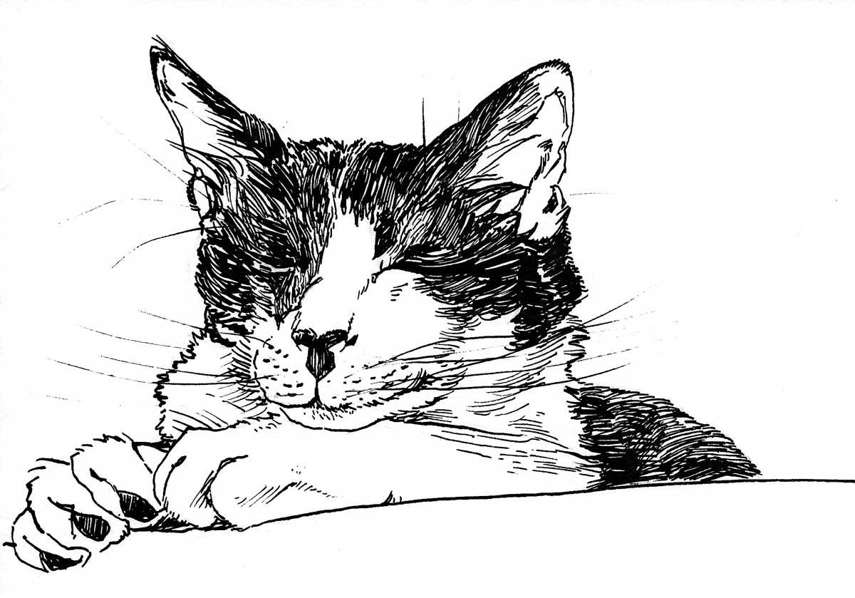 KS-Cat1-Art